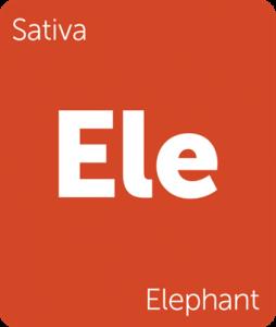 Leafly Elephant sativa cannabis strain