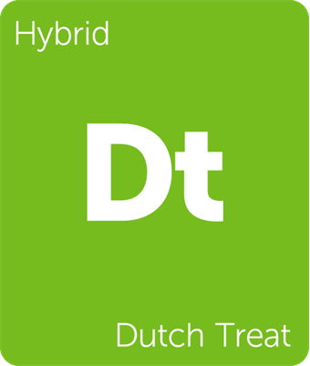 Leafly Dutch Treat hybrid cannabis strain