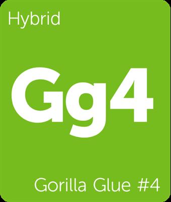 Leafly Gorilla Glue #4 hybrid cannabis strain