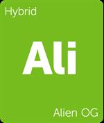 Leafly Alien OG hybrid cannabis strain