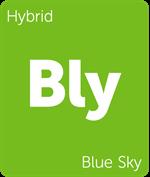 Leafly Blue Sky hybrid cannabis strain
