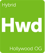 Leafly Hollywood OG hybrid cannabis strain