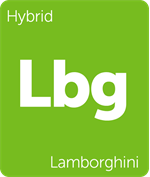 Leafly Lamborghini hybrid cannabis strain