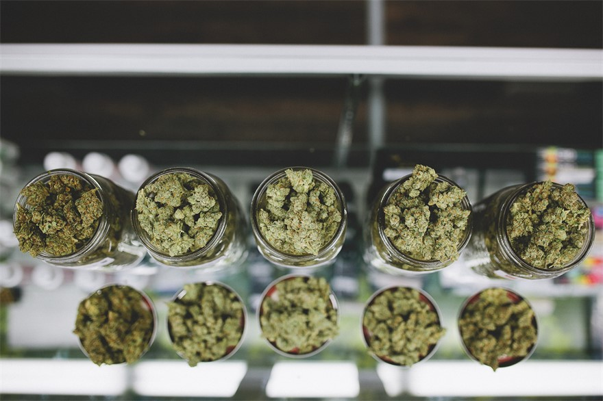 TLC Collective medical marijuana dispensary in Los Angeles, California